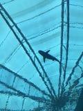 Силуэт акулы Стоковое Изображение RF