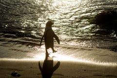 Силуэт африканского пингвина на пляже Стоковое фото RF