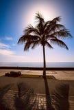 Силуэт ладони и сильный back-light в Испании На заднем плане голубое небо и море Стоковые Изображения