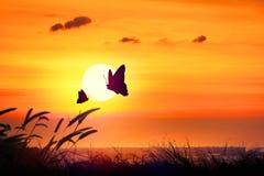 Силуэт бабочки летая внешний заход солнца Стоковая Фотография RF