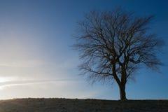Силуэт безлистного дерева против голубого неба Стоковая Фотография RF