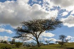 Силуэт безлистного дерева темный на сухом ландшафте зимы Стоковое Изображение