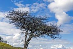 Силуэт безлистного дерева темный на сухом ландшафте зимы Стоковое Фото