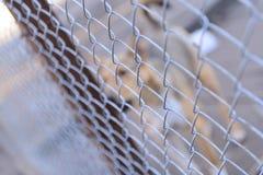 Силуэт бездомной собаки Стоковые Фотографии RF