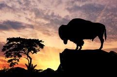 Силуэт буйвола Стоковая Фотография