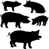 Силуэт вектора †собрания свиней « Стоковые Изображения RF
