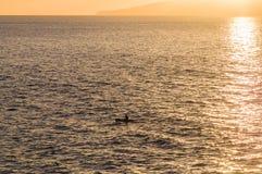 Силуэт весла каяка в свете захода солнца Стоковое Фото