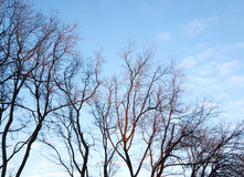 Силуэт ветвей дерева против голубого неба Стоковое Фото