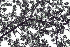 силуэт ветвей дерева против неба Стоковые Изображения RF