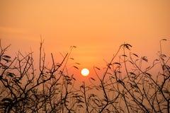 Силуэт ветвей дерева с заходом солнца Селективный фокус Стоковое фото RF