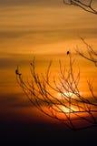 Силуэт ветвей дерева с небом захода солнца стоковое изображение rf