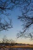 Силуэт ветвей Стоковое Изображение RF