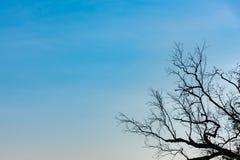 Силуэт ветви в угле против предпосылки голубого неба Стоковое фото RF