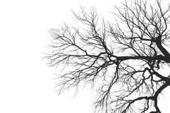 Силуэт ветви дерева без листьев Стоковая Фотография RF