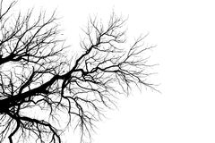 Силуэт ветви дерева без листьев Стоковая Фотография