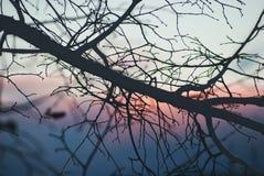 Силуэт ветви дерева на зоре Стоковые Изображения RF