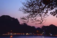 Силуэт ветви дерева на предпосылке красочных солнец Стоковые Фото