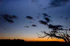 Силуэт ветви на заходе солнца Стоковые Изображения RF