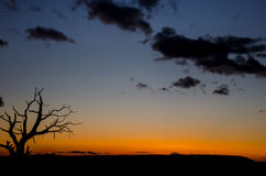 Силуэт ветви на заходе солнца Стоковое Изображение
