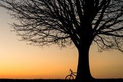 Силуэт велосипеда и дерево зимы на заходе солнца Стоковая Фотография