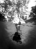 Силуэт водолаза акваланга Стоковые Изображения