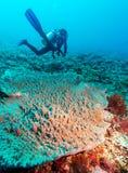 Силуэт водолаза скуба около дна моря Стоковое Изображение