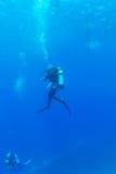 Силуэт водолаза скуба около дна моря Стоковое Фото