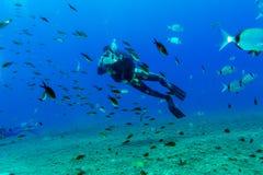 Силуэт водолаза скуба около дна моря Стоковое фото RF