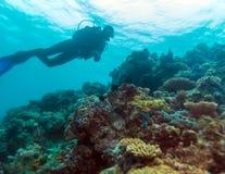 Силуэт водолаза скуба около дна моря Стоковая Фотография