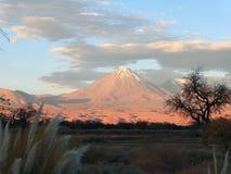 Силуэт вулкана и дерева Стоковое Фото