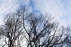 Силуэт голубого неба ветвей дерева Стоковые Фото