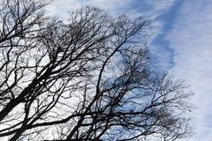 Силуэт голубого неба ветвей дерева Стоковая Фотография RF