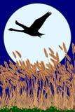Силуэт лебедя бесплатная иллюстрация
