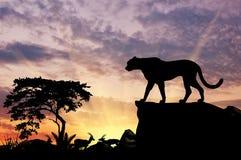 Силуэт леопарда Стоковые Изображения RF