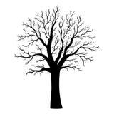 Силуэт дерева вектора на белизне Стоковая Фотография