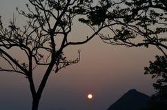 Силуэт дерева в заходе солнца Стоковые Фото
