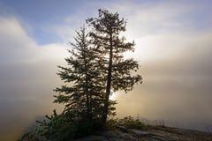 Силуэт дерева в Солнце и утро fog в северных древесинах Стоковые Фотографии RF