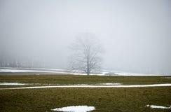 Силуэт дерева в тумане Стоковые Фотографии RF