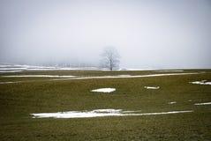 Силуэт дерева в тумане Стоковая Фотография RF