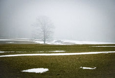 Силуэт дерева в тумане Стоковое фото RF