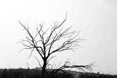 Силуэт дерева в черно-белом Стоковые Изображения RF