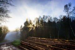 Силуэт дерева зимы в большом тумане Стоковые Фото