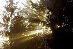 Силуэт дерева зимы в большом тумане Стоковые Изображения