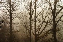 Силуэт дерева зимы в большом тумане Стоковая Фотография RF