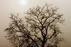 Силуэт дерева зимы в большом тумане Стоковое Фото