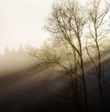 Силуэт дерева зимы в большом тумане Стоковое фото RF