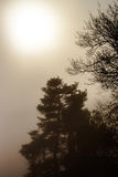 Силуэт дерева зимы в большом тумане Стоковые Изображения RF
