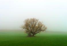 Силуэт дерева зимы в большом тумане Стоковое Изображение RF