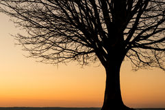 Силуэт дерева зимы на заходе солнца Стоковые Изображения