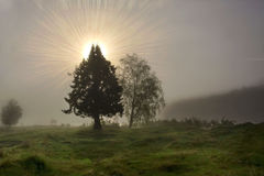 Силуэт дерева назад-осветил мистическим солнцем светя через туман Стоковое Изображение
